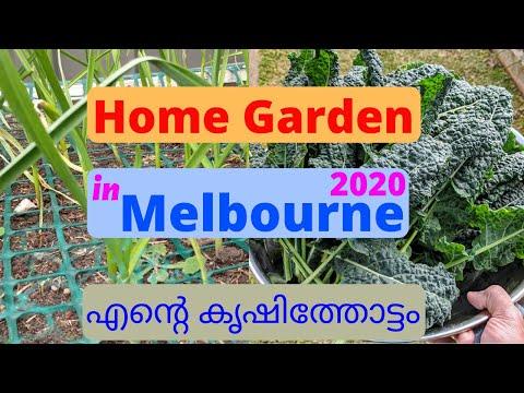 Home Garden in Melbourne 2020 (എൻ്റെ കൃഷിത്തോട്ടം)