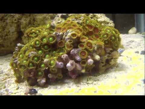 So many amphipods!!
