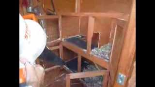 Extreme Rabbit Hutch Cleaning - Steve Edge - Weekly Wisdom - 10th October 2013