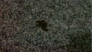 #104_2. Удаление жвачки с коврового покрытия (735-93-75)(, 2013-02-22T16:15:52.000Z)