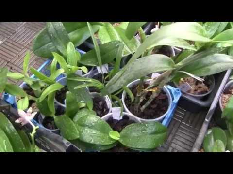 Сезонная обработка орхидей. Осень
