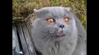 Говорящий кот ругается матом Смешно аж плакать хочется