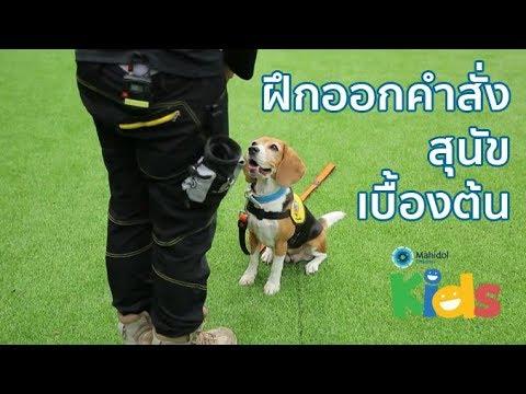 การฝึกออกคำสั่งสุนัขเบื้องต้น [Animals Speak by Mahidol]