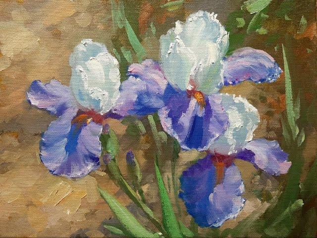 Ирисы  Irises Vugar Mamedov
