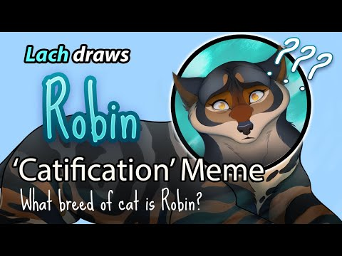 Lach Draws Robin As A Cat - Domain Of The Wolf Meme