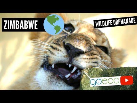 GoEco Zimbabwe - African Wildlife Orphanage