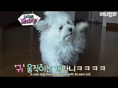 A cute dog that knows how to move its ears