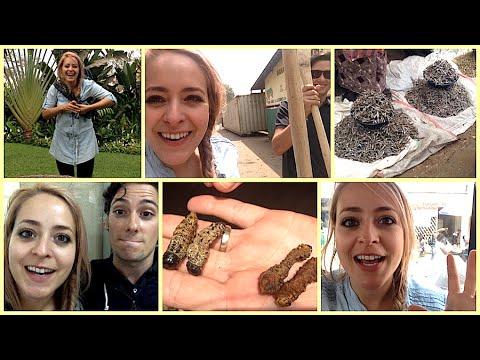 Zambia Vlog: Eating Caterpillars & Tiny Planes!
