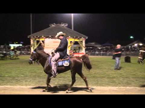 AVA 2009  Missouri Fox Trotter World Grand Championship Highlights