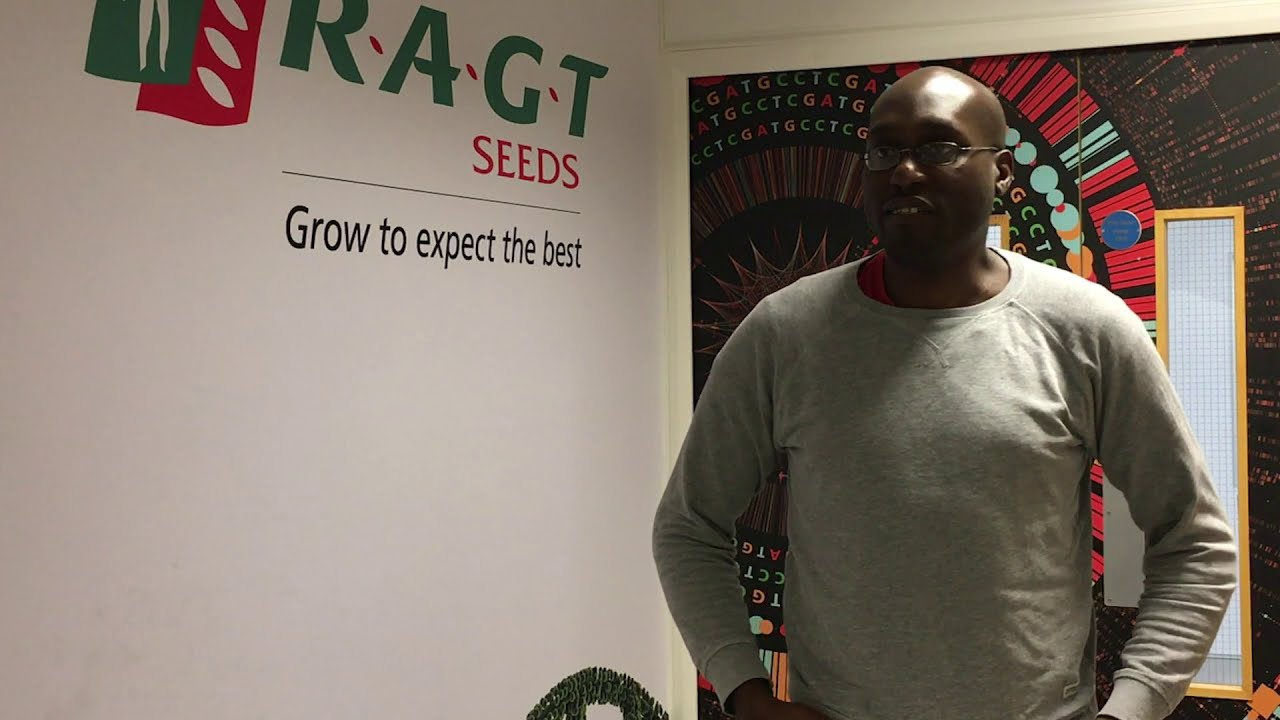 UKRI funding helps RAGT Seeds fast-track access to key wheat traits