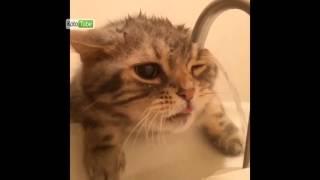 Мини подборка смешных видео про кошек 2016