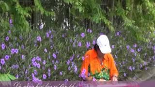 TOI VAN YEU HOA MAU TIM Hoàng Trong Guitar Hawaii CAODZAN 06DVD50