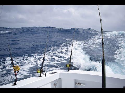 2016 Blue Marlin -Gulf of Mexico- Fishing Trip