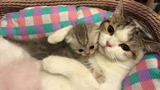 Mom cat hugs