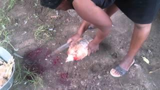Chicken Kill