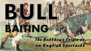 Bull Baiting (history Of Bulldogs)