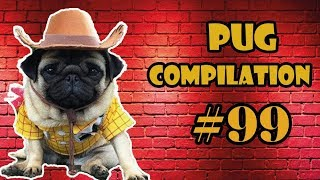 Pug Compilation 99 - Funny Dogs but only Pug Videos | Instapugs