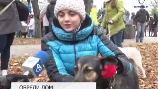 В парке Победы проходит пятая выставка-раздача бездомных собак «Пойдём домой»