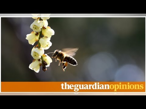 Michael gove why a ban on pesticides killing bees. but it is only a start | Hannah lownsbrough