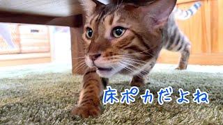 猫達床暖の季節だよ