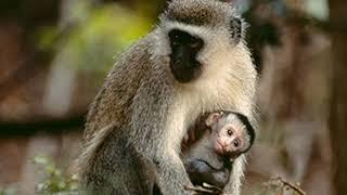 Inilah !!! 5 Arti Mimpi Monyet Menurut Islam – Dikejar, Digigit,