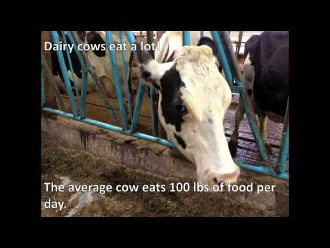 R & G Miller Organic Dairy Farm