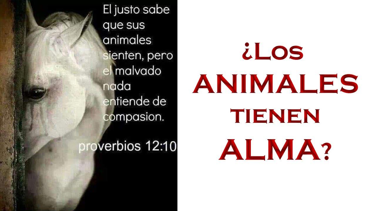 ¿Los Animales tienen ALMA?