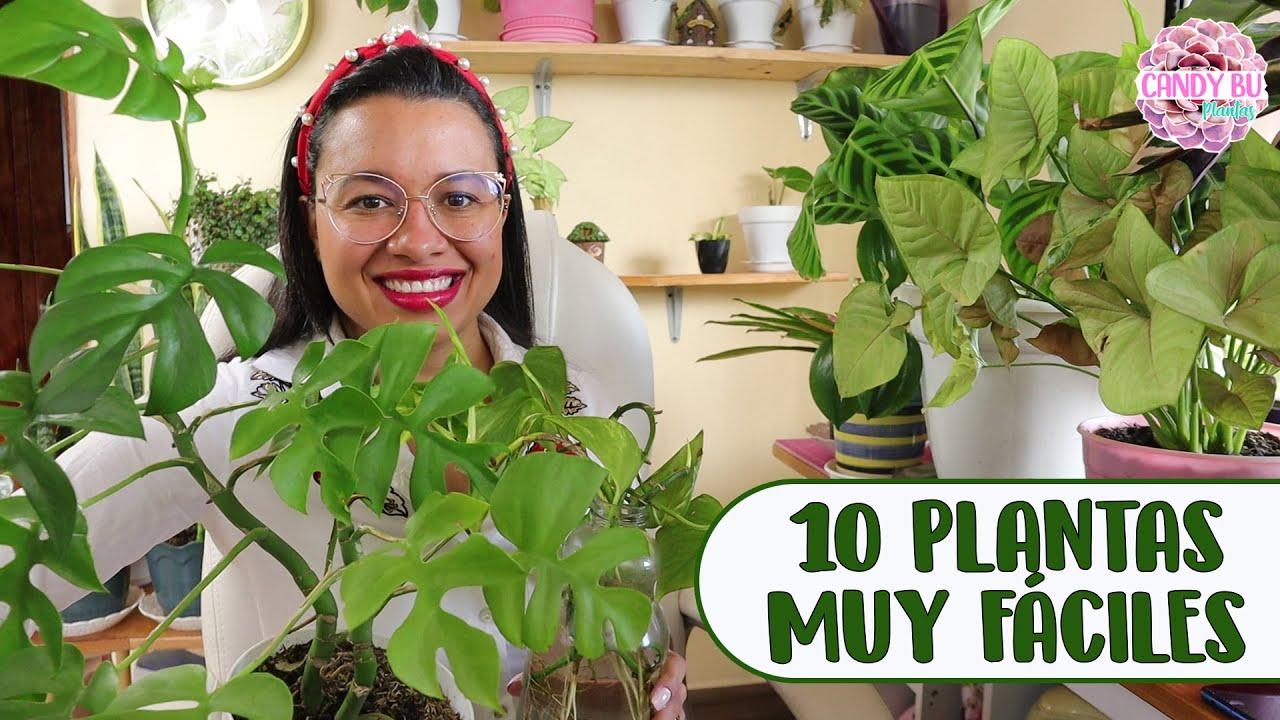 10 PLANTAS DE INTERIOR MÁS FÁCILES DE CUIDAR│Candy Bu