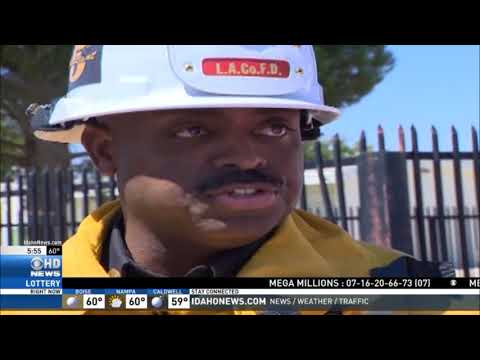 Bee Swarm Attacks Palmdale CA Students