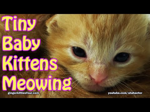 Cute Tiny Baby Kittens Meowing