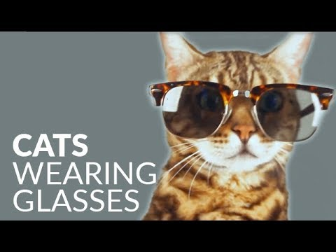 Cute cats wearing glasses - funny cat video