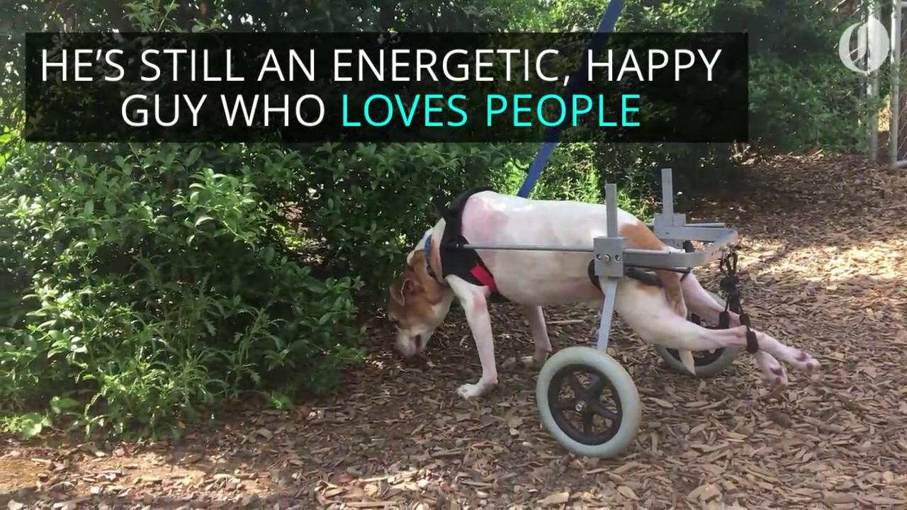 Dog on wheels needs new home