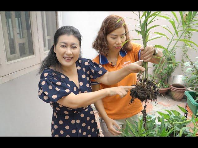 Cùng nghệ sĩ Thanh Thủy thu hoạch rau sạch tại nhà