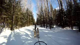 Fun Run While Dog Sledding In New Brunswick Canada