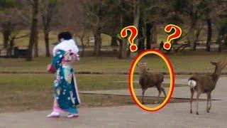 【海外の反応】外国人が日本の観光地で撮ったほっこりする写真が話題に!! 奈良に行くとたくさん見かける○○が最高!? 海外「これだから日本が好き…」【動画のカンヅメ】