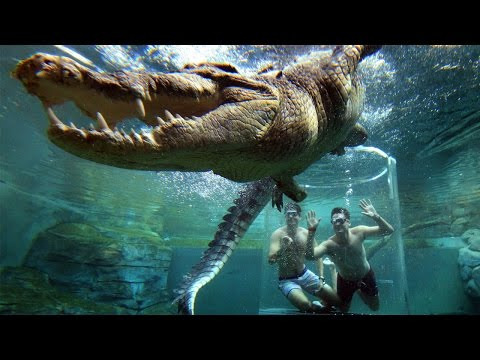 Theme Park Allows Tourists Underwater With A 5M Crocodile