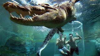 Theme Park Allows Tourists Underwater With A 5M Crocodile thumbnail