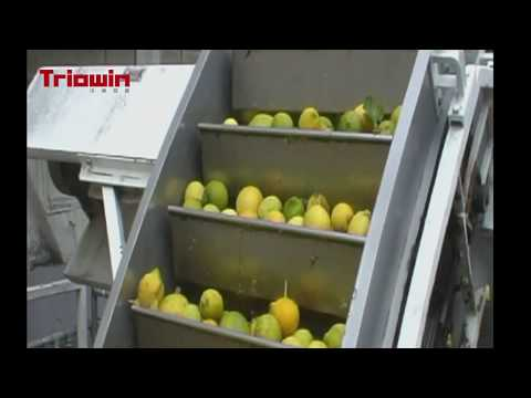Citrus Processing Line – Triowin Intelligent Machinery