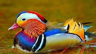 Необычайный мир животных и птиц