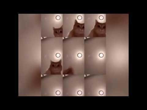 Mr sandman cat challenge compilation