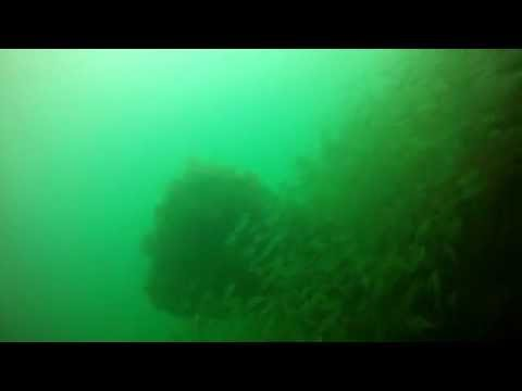 Shot with GoPro HD in r3 as a test with snake river prototyping flat lens and urpro cyan filter. Sherman civil war wreck dive @ 53 ft.