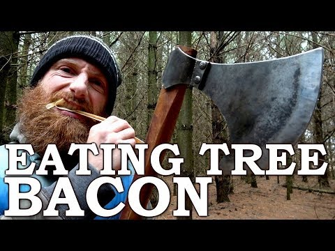 Eating TREE BACON like a BEAVER with Viking AXE! | Cambium Survival Food | Tormund Giantsbane