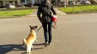Беспредельщики на дороге. Собака чудом выжила!