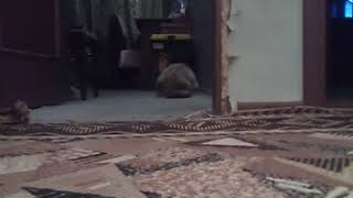 Кот играет с тенью