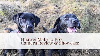 Huawei Mate 10 Pro Camera Review with over 40 photos & video