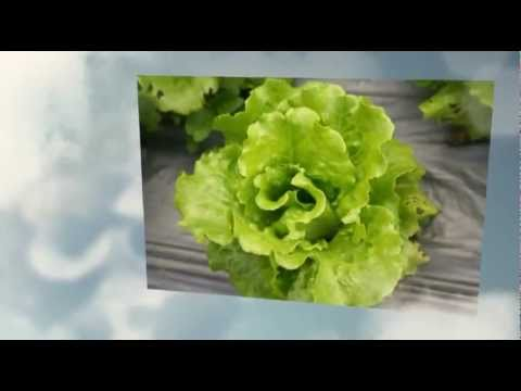 Cottage Farm - Organic Food Home Delivery - Product (Chinese)