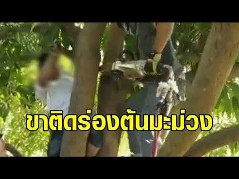 เด็กอยู่บ้านปิดเทอม ซนปีนต้นมะม่วง พลาดขาติดออกไม่ได้ ต้องแจ้งกู้ภัยช่วย