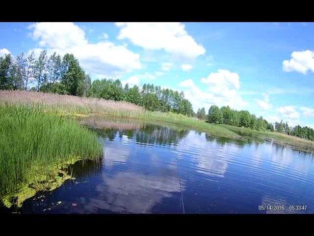 Заболоченное озеро 3