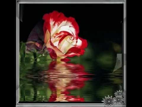 Amigos......      Rote Rosen