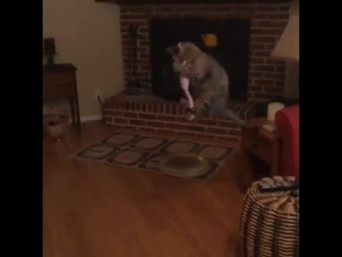 COOLEST JUMPING CAT EVER!!    Catches toy mid air in SLO-MO!